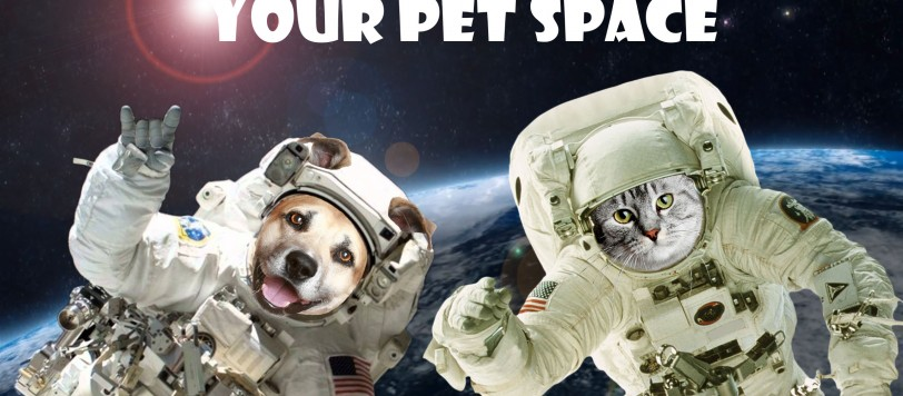 Large Your Pet Space Banner