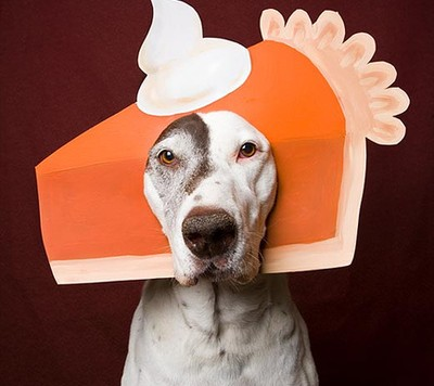 pumpkin pie dog