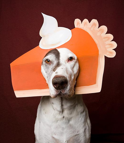 Thanksgiving is Almost Here!