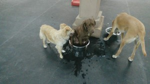 Gus chooses the other drinking bowl and Garrett  waits patiently as Aspen takes a dip in the Alpha Quadrant.