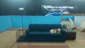 Hoagy relaxes on the new Milky Way couch.