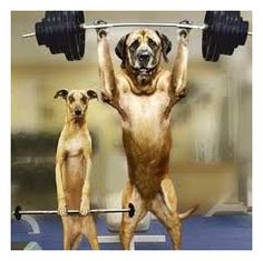 dogs pumping iron