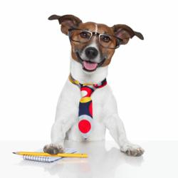 dog admin