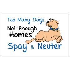 spay neuter