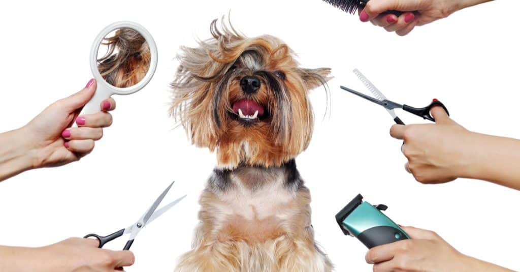 Grooming at Your Pet Space–by Dave Jones, owner