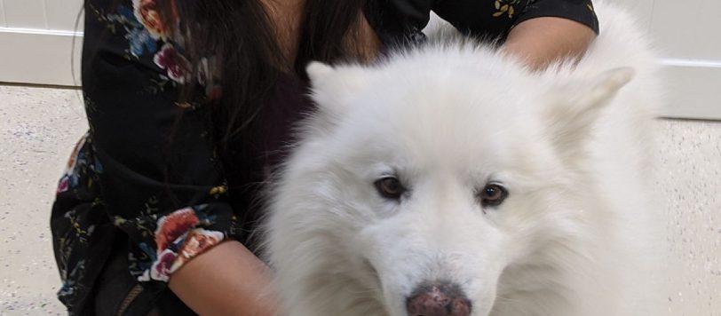 Nissy Gutierrez OVERNIGHT PET CARE SPECIALIST